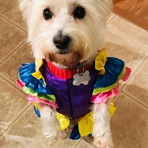 Brazilian bombshell dog costume